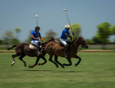 check out a polo game